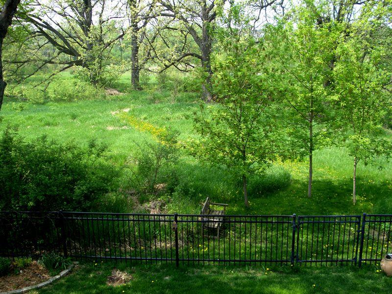Dandelion path 051813