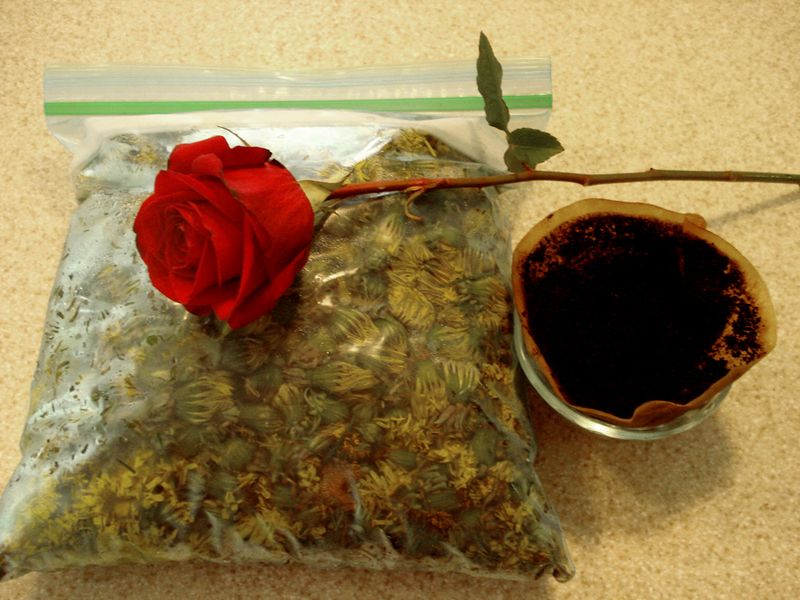 Dandelions, rose, and coffee grounds on counter 051813