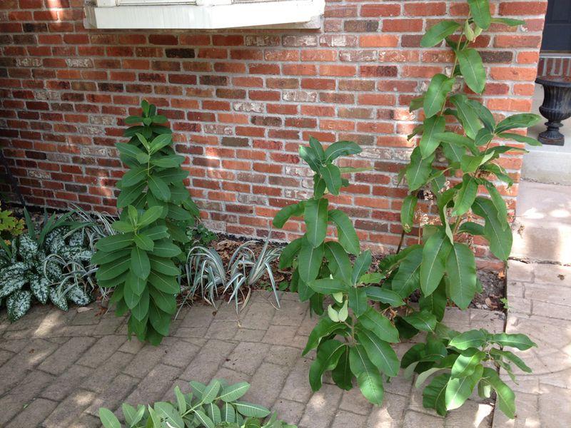 2--volunteer plants