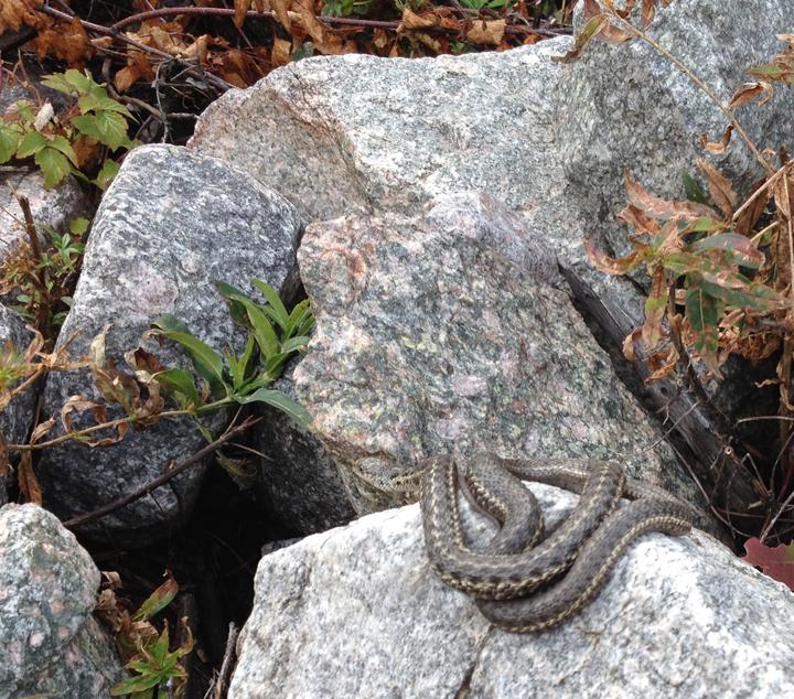 08b--snake